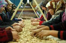 Women sorting nuts